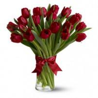 Tulipanes Premium, Dominicana